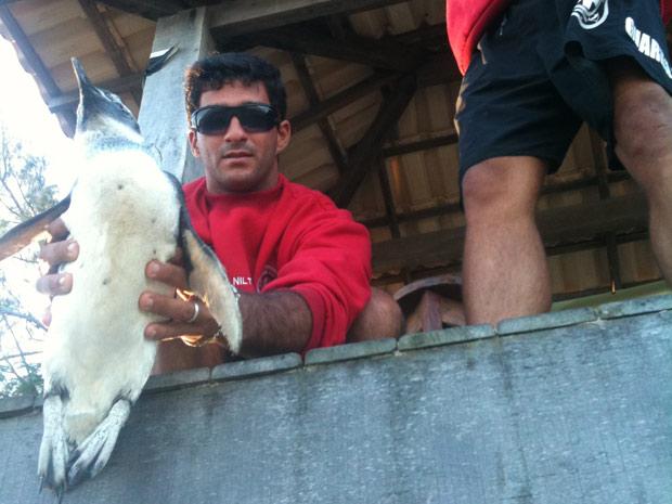 Pinguim resgatado em Geribá, Búzios