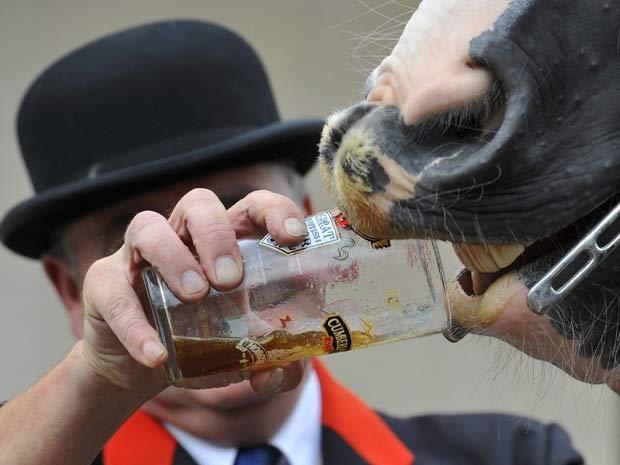 Cavalo bebe cerveja durante festival.