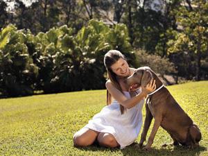 Coleira antipulga ajuda a proteger cães do mosquito que transmite a leishmaniose