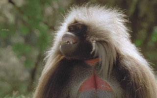 Globo Repórter revela os animais que são os prodígios da natureza