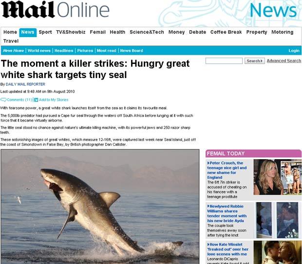Fotógrafo flagrou tubarão branco capturando presa.