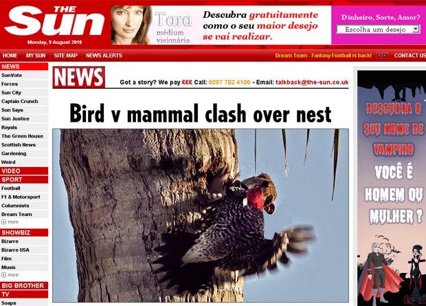 Pica-pau voltou tentou recuperar seu ninho, mas sem sucesso.
