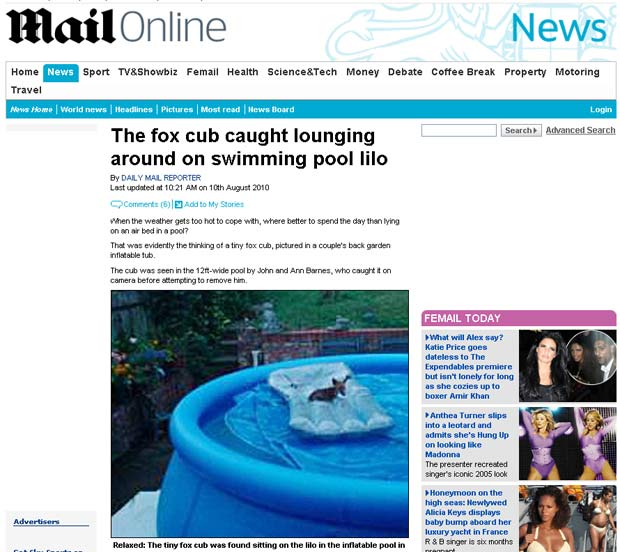 Raposa foi flagrada em cima de um colchão de ar dentro de uma piscina.