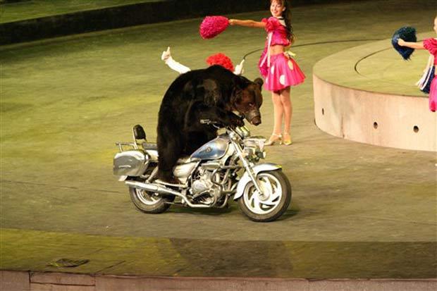Urso anda de moto no parque Xiangjiang em Guangzhou.