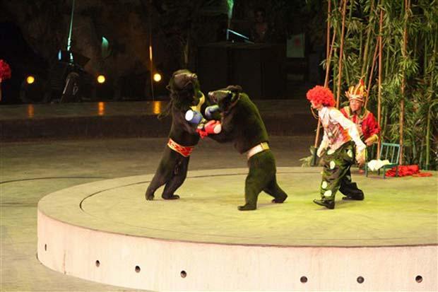 Ursos durante luta de boxe no parque Xiangjiang em Guangzhou.