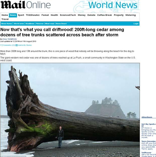 Tronco de uma árvore mais de 60 metros de comprimento apareceu em praia nos EUA.