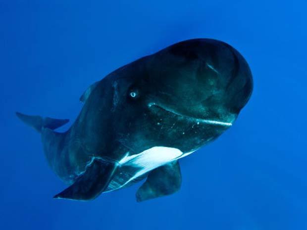 Baleia parece sorrir para câmera.