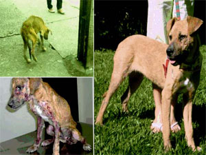 A vira-lata Vitória foi um dos animais resgatados por um protetor; depois de recuperada, ganhou um lar