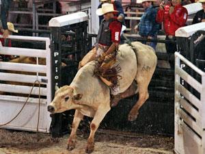 Campeão de montaria em touros vai ganhar R$ 100 mil