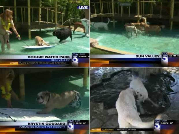 Primeiro parque aquático exclusivo para cães foi aberto nos EUA.