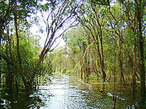 Floresta estadual