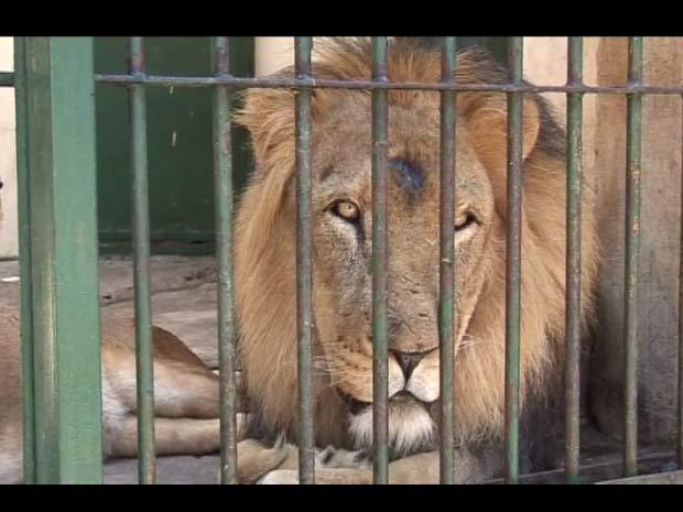 Funcionários se aproveitam da precariedade da administração do zoológico para ganhar dinheiro por fora em tours de animais que não estão à mostra