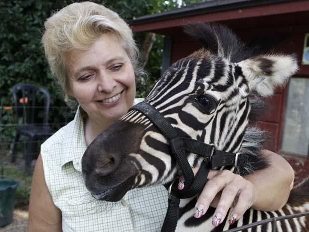 Cindy Huntsman com sua zebra de estimação chamada 'Savanah'.