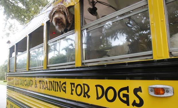 Cães são levados em um tradicional ônibus escolar.