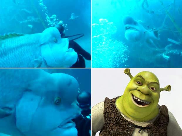 Peixe ganhou apelido de Shrek.