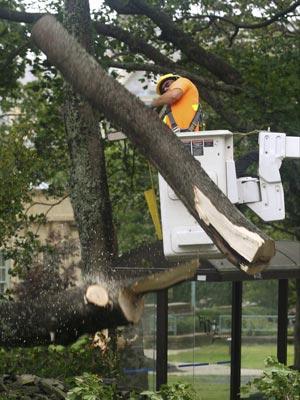 Um funcionário municipal corta árvore caída em rua de Halifax, Nova Escócia, após a passagem da tempestade Earl pelo Canadá