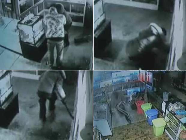 Dupla de ladrões havia roubado uma píton de 1,5 metro chamada Boris.