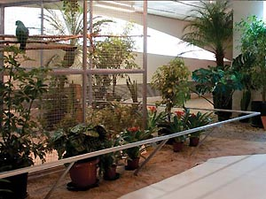 A 'Tropicália', criada em 1968