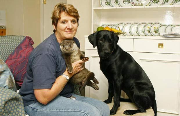 Britânica Pauline Kidner com lontra 'Garaint' e acadela 'Mollie'.