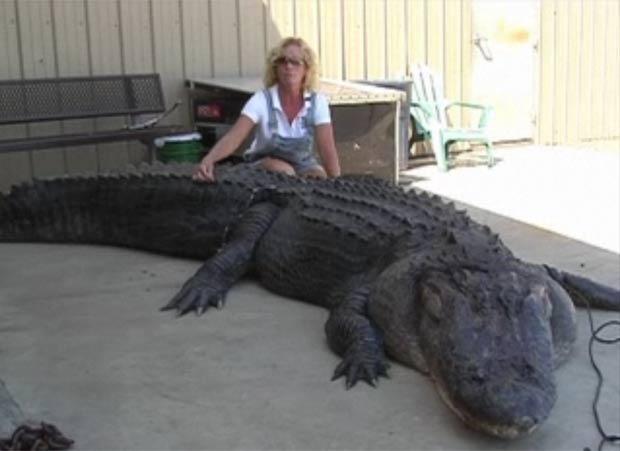 Mary Ellen Mara-Christian posa com o aligátor de quatro metros de comprimento.