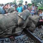 Trem mata 7 elefantes na Índia (AFP)