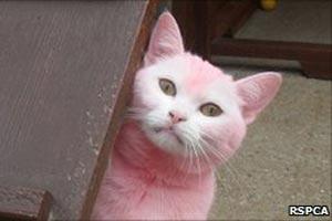 A gata rosa.