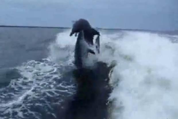 Golfinhos se chocaram no ar enquanto nadavam.