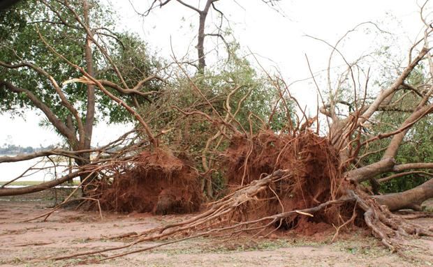 Força do vento arrancou árvores na cidade.