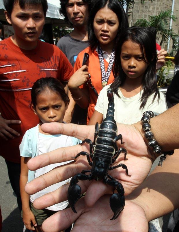 Allan Palaganas levou seu escorpião para abençoar e causou espanto entre as crianças.