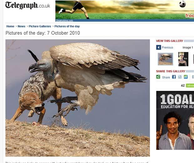 Confronto aconteceu quando o chacal roubou um osso do abutre.