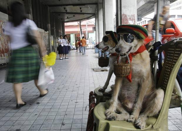Dono colocou chapéu e óculos nos cães para chamar atenção.