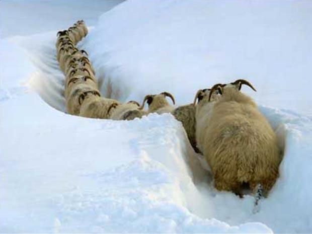 A foto de um rebanho de ovelhas tentando voltar para casa depois de uma nevasca foi a escolhida do público entre as mais de 65 mil imagens recebidas pelo programa da BBC Countryfile, sobre a zona rural britânica.