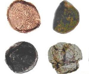 Esporos de plantas na Argentina são os mais antigos já encontrados.