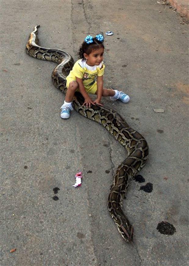 Menina brinca com cobra em Ramallah.