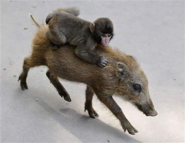Animais vivem no zoológico desde junho depois que ficaram órfãos.