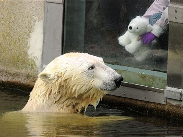 Knut brinca com o urso de pelúcia Knut nesta terça-feira (19) no zoo de Berlim.
