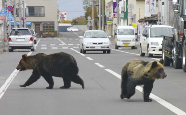 Animais foram vistos 'passeando' pelo centro da cidade por cerca de 40 minutos.