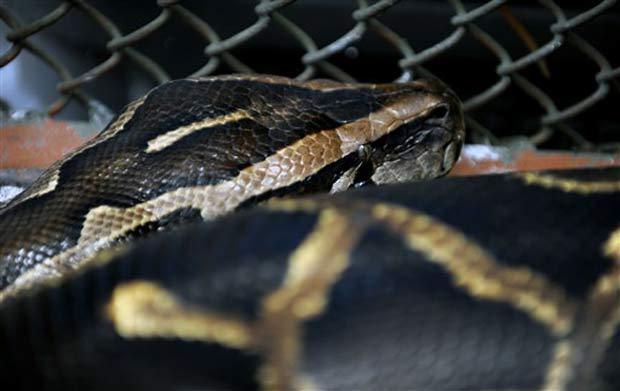 Cobra chamada 'Laika' virou atração turística na cidade de Turrialba.