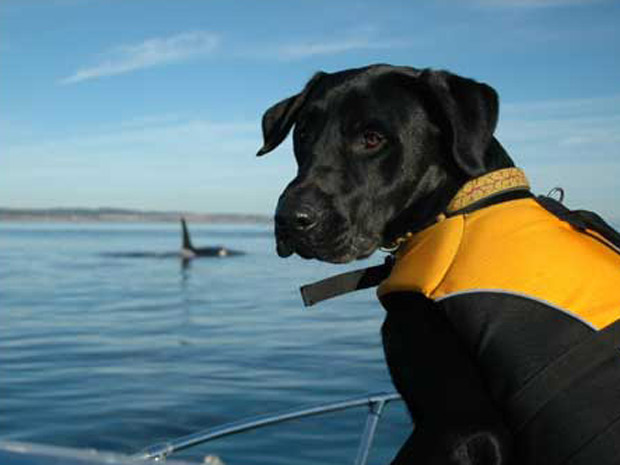 Cães baleias 2