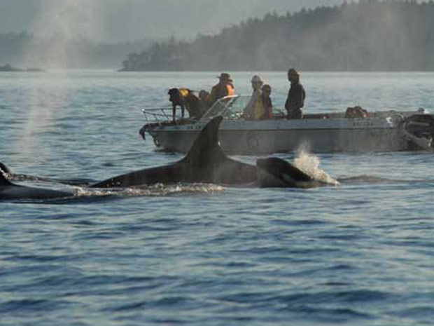 Cães baleias 3