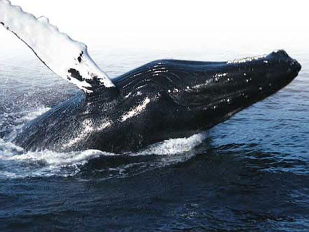 Cães baleias 4