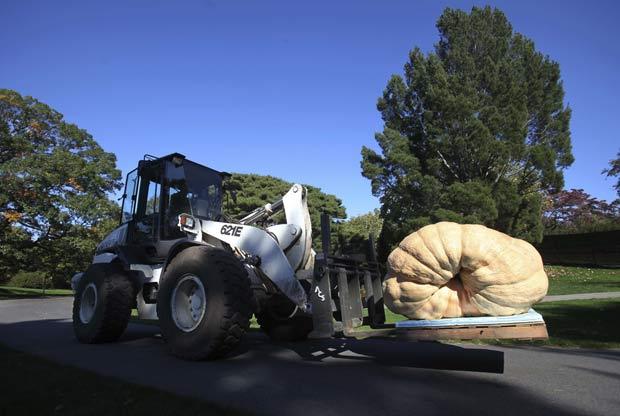 Abóbora gigante pesa quase uma tonelada.