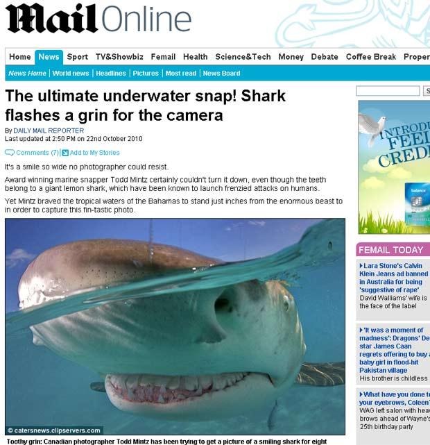 Tubarão-limão parece estar sorrindo para a câmera.