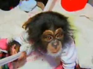 Macacos podem ser vítimas de maus-tratos