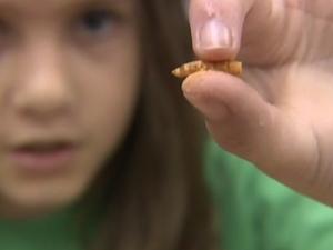 Menina segura larva, uma das iguarias da escola Robeson.