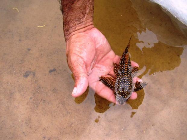 Animais foram devolvidos à natureza no Rio Xingu, no Pará