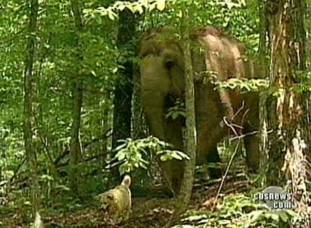 Elefanta 'Tarra' e a cadela 'Bella' são vistas sempre juntas.
