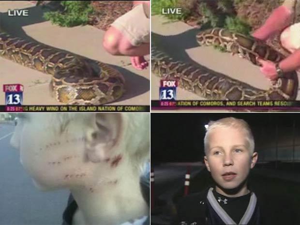 Cobra de 4,3 metros atacou adolescente em apresentação.