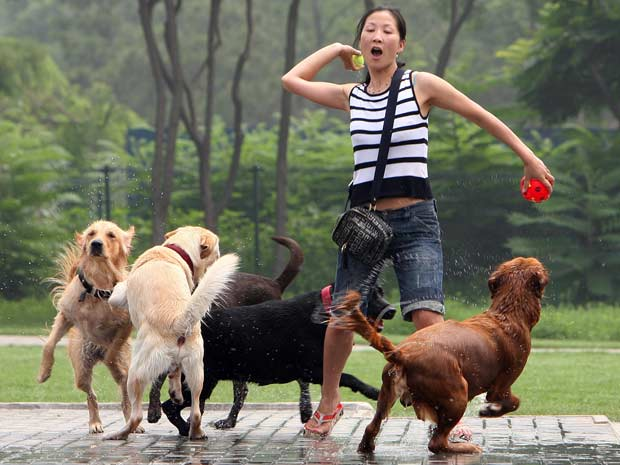 Chinesa brinca com cachorros em parque de Pequim