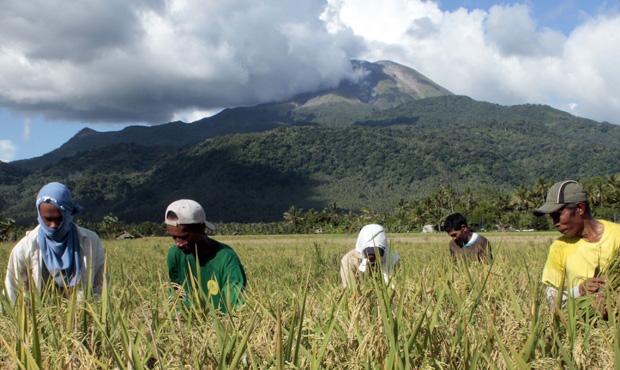 Fazendeiros filipinos colhem arroz aos pés do Monte Bulusan, na província de Sorsogon, na segunda-feira (8).